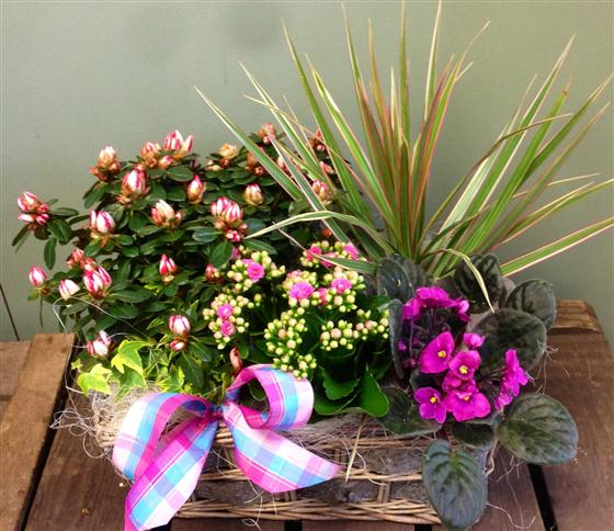 Long Lasting Planted Basket